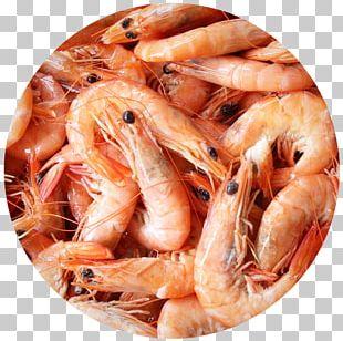 Prawns Caridea Restaurante Senhor Peixe Shrimp Seafood Restaurant PNG
