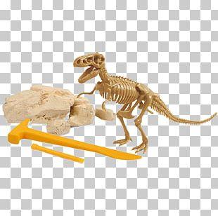 Velociraptor Jurassic Park Dinosaur Будинок Iграшок YouTube PNG
