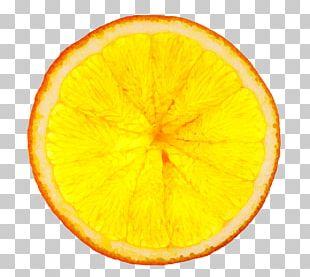 Orange Juice Tequila Sunrise Vegetarian Cuisine PNG