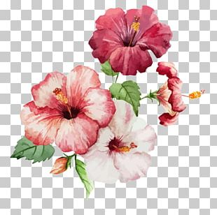 Watercolor Painting Paper Drawing PNG