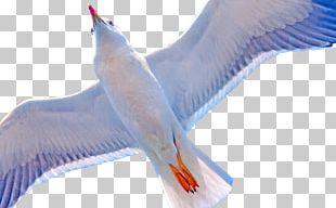 Beak Water Bird Feather Wing PNG