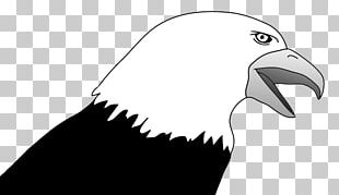 Bald Eagle Bird PNG