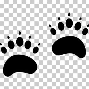 Grizzly Bear Animal Track Polar Bear PNG