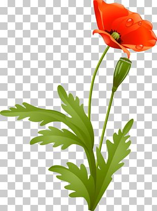 Flower Poppy Petal Plant Stem PNG