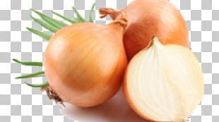 Onion Organic Food Health Vegetable PNG