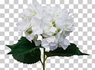 Cut Flowers Hydrangea Artificial Flower Flower Bouquet PNG