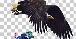 Bald Eagle Bird Flight Desktop PNG