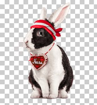 Domestic Rabbit Easter Bunny Whiskers Snout PNG