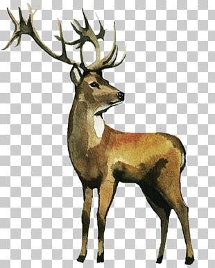 Reindeer Watercolor Painting Elk PNG