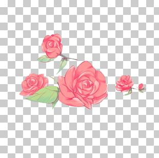 Garden Roses Cabbage Rose Petal Flower Floral Design PNG
