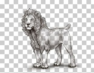 Dog Breed Lion Cat Drawing PNG