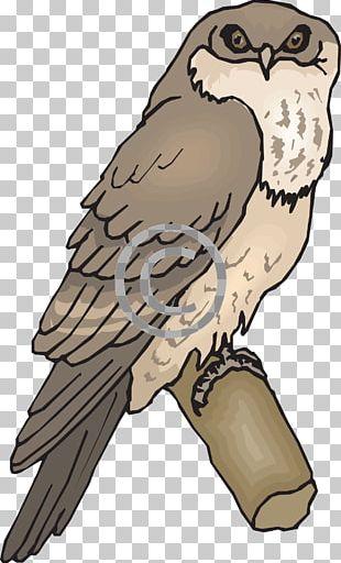 Owl Bird Tawny Frogmouth Beak PNG