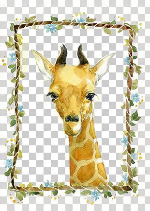 Giraffe Illustrator Illustration PNG
