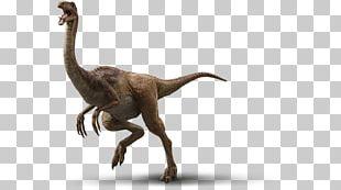 Velociraptor Jurassic Park Gallimimus Dinosaur Isla Nublar PNG