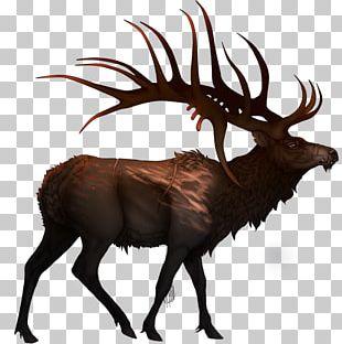Elk Cattle Reindeer Mammal Wildlife PNG