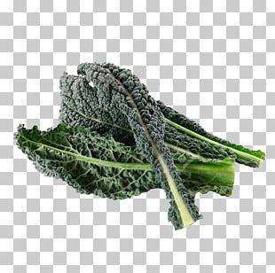 Lacinato Kale Organic Food Leaf Vegetable PNG