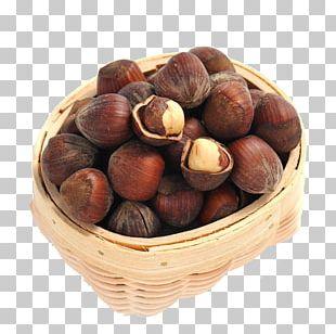 Acorn Euclidean Oak PNG