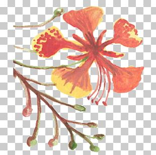 Flower Hibiscus Floral Design Mallows Plant PNG