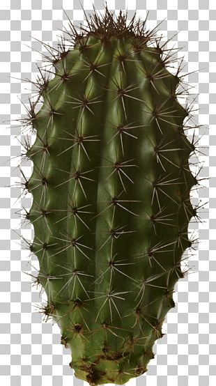 Isolated Cactus PNG