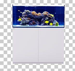 Reef Aquarium Aquariums Sump Aquarium Lighting PNG