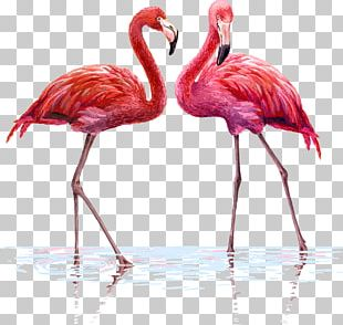 Flamingo Wall Decal Tapestry Interior Design Services PNG