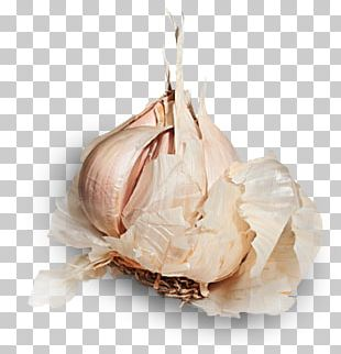 Garlic Shallot Vegetable Allicin Food PNG