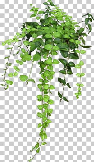 Flowerpot Houseplant Hanging Basket Vine PNG