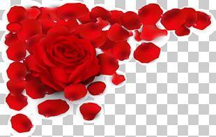 Rose Red Petal Illustration PNG