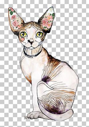 Sphynx Cat Donskoy Kitten Ultimate Cat Black Cat PNG