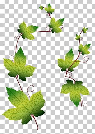 Leaf Grape Leaves PNG