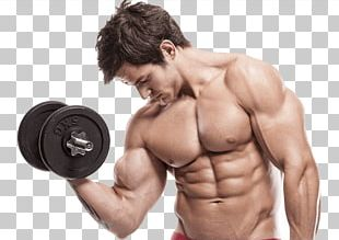 Bodybuilding Body Builders Gym Physical Exercise Physical Fitness Bench PNG