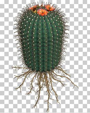 Cactaceae Succulent Plant San Pedro Cactus Flowering Plant PNG