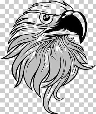 Bald Eagle PNG
