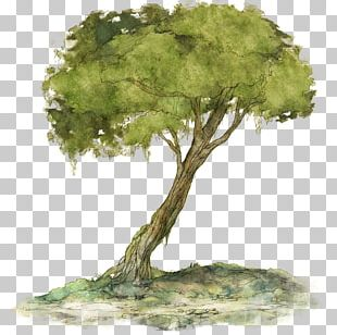 Child Of Light Woody Plant Tree Houseplant PNG