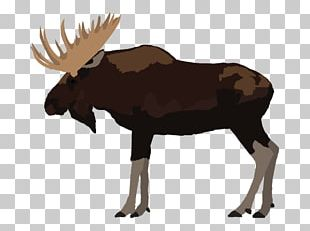 Moose Reindeer Elk Cattle Antler PNG