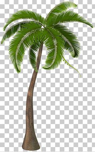 Arecaceae PNG