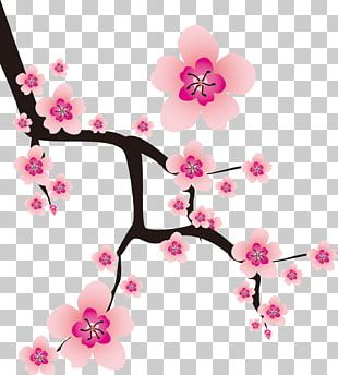 Plum Blossom Cherry Blossom Flower PNG