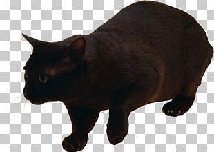 Manx Cat Havana Brown Felidae Kitten Black Cat PNG