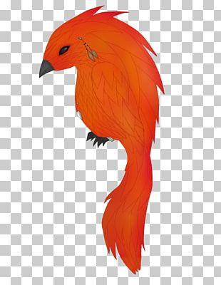 Parrot Bird Beak Feather PNG