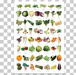 Auglis Fruit Vegetable English PNG