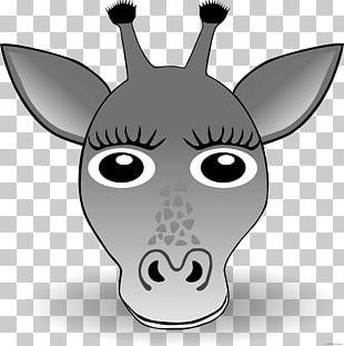 Giraffe Graphics Face Illustration PNG