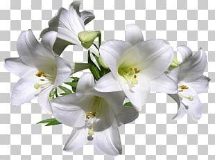 Fleurs Des Jardins Lilium Davidii Madonna Lily Tiger Lily Cut Flowers PNG