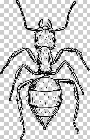 Ant Drawing Art PNG