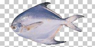 Pampus Argenteus Black Pomfret Fish Seafood PNG
