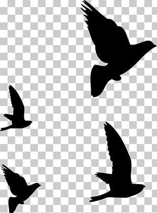 Hummingbird Flight Silhouette Drawing PNG