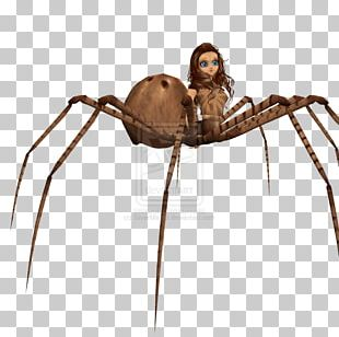 Angulate Orbweavers Video Game Development Widow Spiders PNG