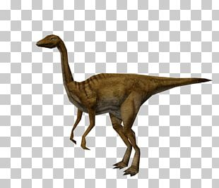 Gallimimus Jurassic Park: Operation Genesis Jurassic Park: The Game Dinosaur PNG