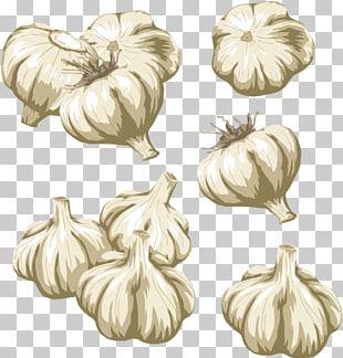 Vegetable Garlic PNG