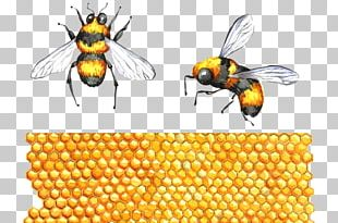 Honey Bee Hornet Bumblebee The Interpretation Of Dreams By The Duke Of Zhou Apitoxin PNG