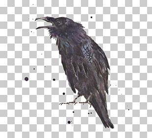 Common Raven The Raven Art Printmaking PNG